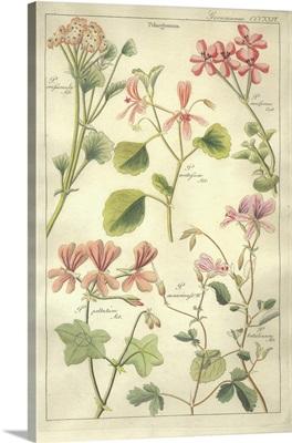 Geranaiaceae Plate 326