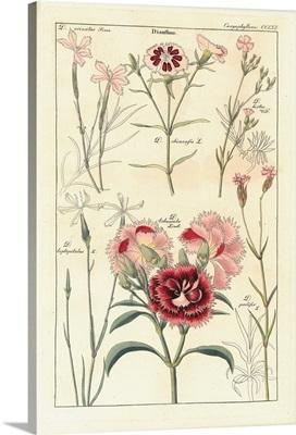 Geraniaceae Plate 1