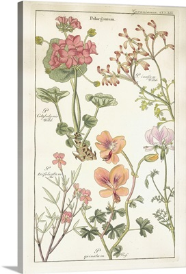 Geraniaceae Plate 319