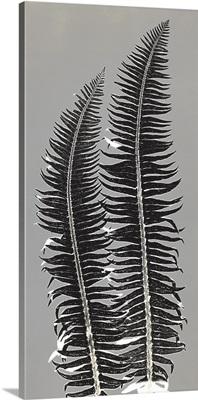 Gray Ferns