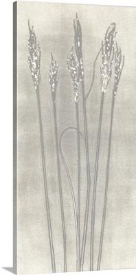 Gray Wheat I