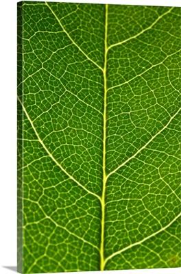 Green Leaf A