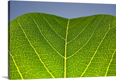 Green Leaf B