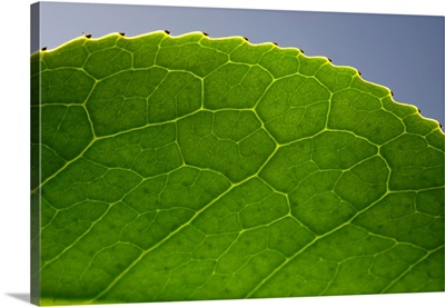 Green Leaf F