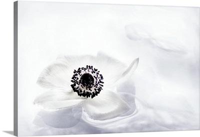 La Fleur Tranquille I