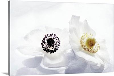 Les Fleurs Immobiles I