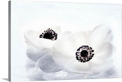 Les Fleurs Immobiles II