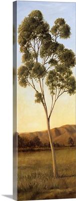 Lonely Eucalyptus I