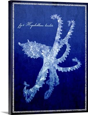 Marine Collection VII - Octopus