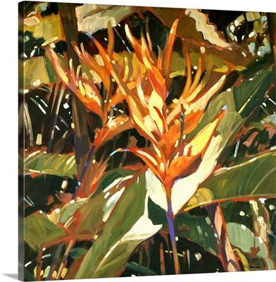 Orange Heleconia