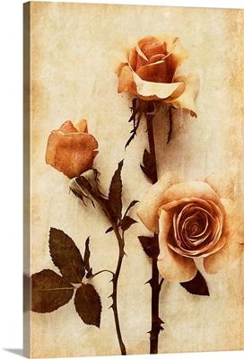 Orange Rose I