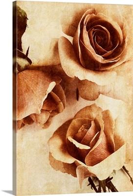 Orange Rose II