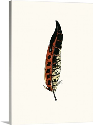 Painted Feather C