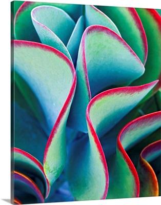 Succulent - Color 79