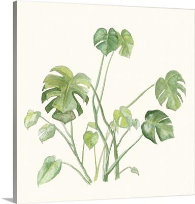 Tropical Botanicals 7