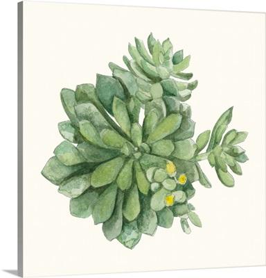Tropical Botanicals 8