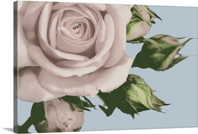 Vintage Florals  A