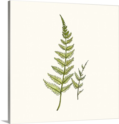 Watercolor Forest Ferns
