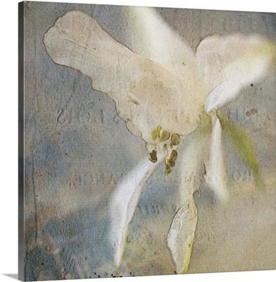 White Flower IV