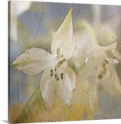White Flower V