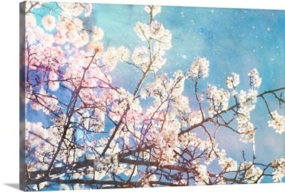 White Tree and Stars