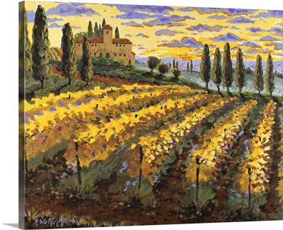 Sunset on the Vineyard