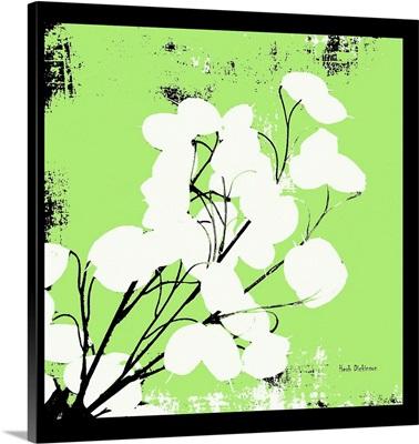 Lime Green Money Plant