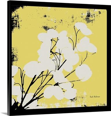 Yellow Money Plant