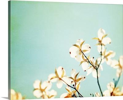Blossoms Adrift