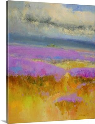 Field of Lavenders 1