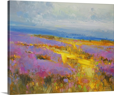 Field of Lavenders 2
