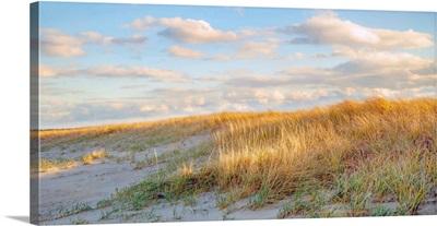 Grassy Dunes Panorama