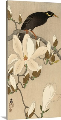 Myna on Magnolia Branch, 1900-1910