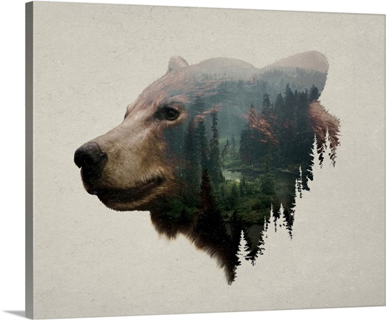 Pacific Northwest Black Bear Wall Art, Canvas Prints, Framed Prints ...