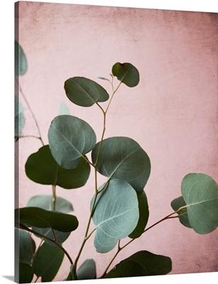 Sage Eucalyptus No. 2