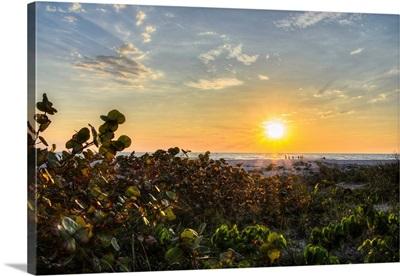 Sea Grapes at Sunset