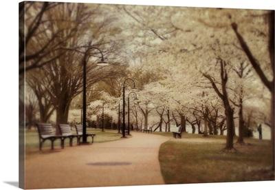 Springtime Stroll