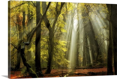 Yellow Leaves Rays