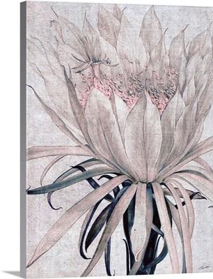 Desert Blossom Blush 1