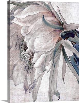 Desert Blossom Blush 5