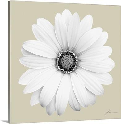 Flora Tint 1