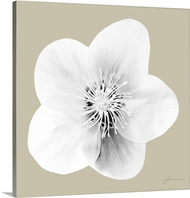 Flora Tint 10