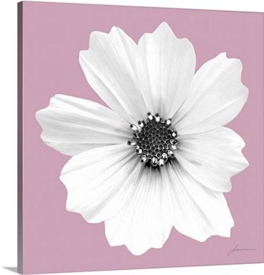 Flora Tint 3