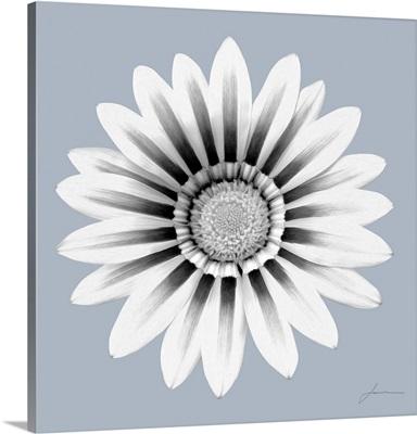 Flora Tint 6