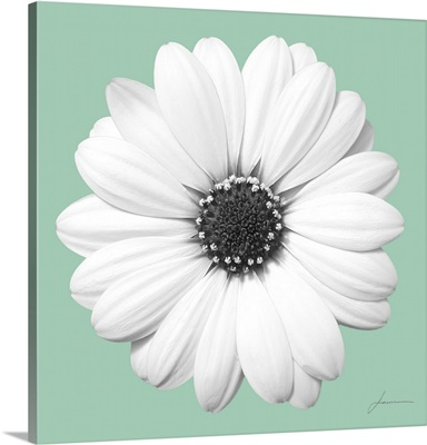 Flora Tint 8