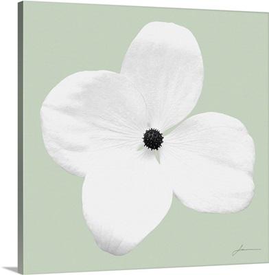 Flora Tint 9