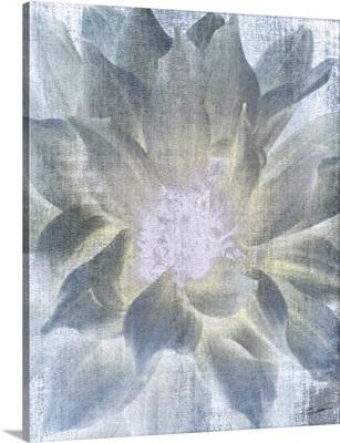 Serenity Bloom 1