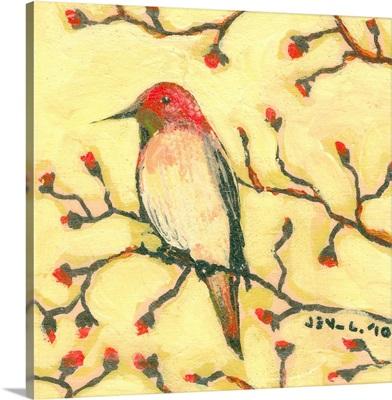 First Hummingbird