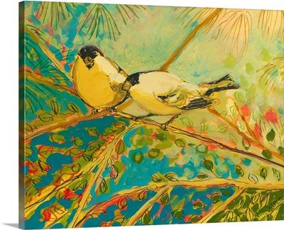 Two goldfinch found