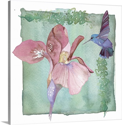 Hummingbird and Flower - Iris